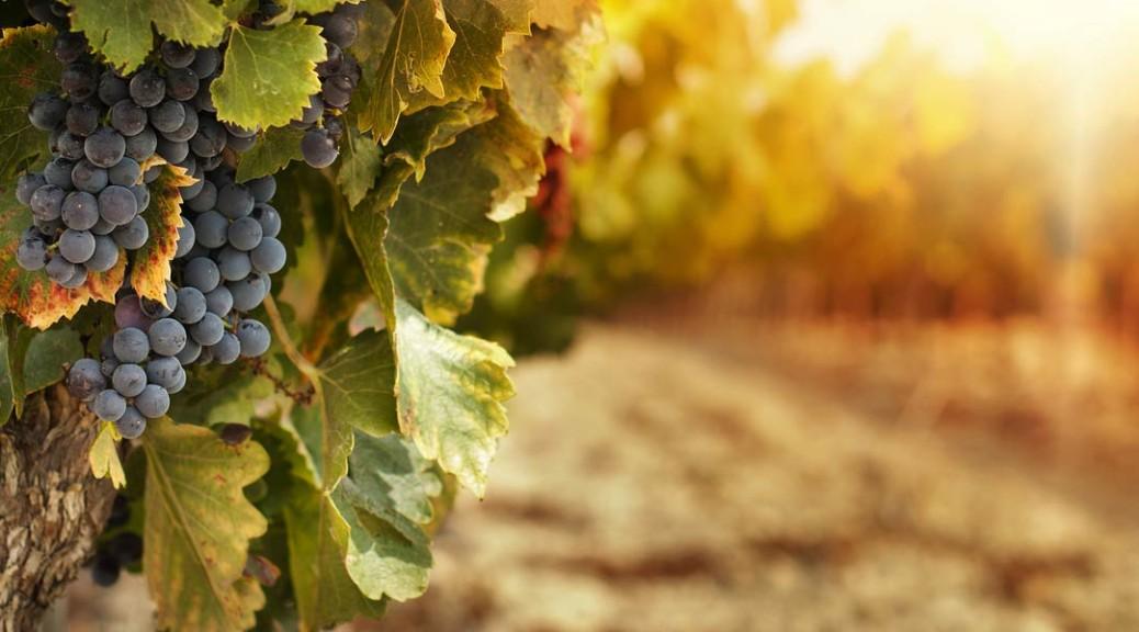 kudos-wine-homepage-main-img